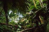 """Постер, картина, фотообои """"Тропические джунгли"""""""