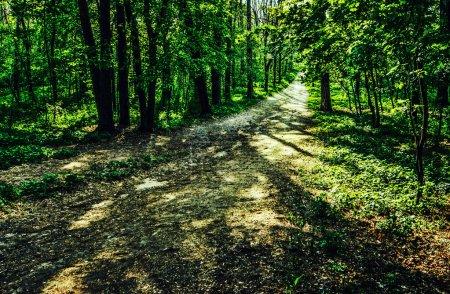 Foto de Ruta desierta en el pinar - Imagen libre de derechos
