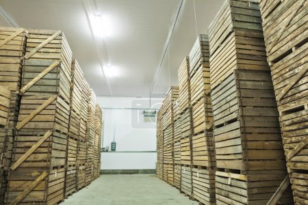 view on crates  of potato in storage house