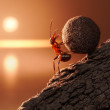 Ant Sisyphus rolls stone uphill on mountain, conce...