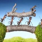 Team of ants carry log on bridge, teamwork concept...