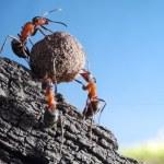 Team of ants rolls stone uphill, teamwork concept...