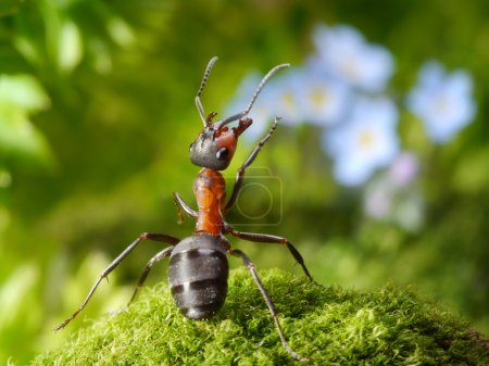 Admired with flowers, ant tales