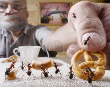 Photo pour Récompenses humaines fourmis avec cuisson, contes de fourmis - image libre de droit