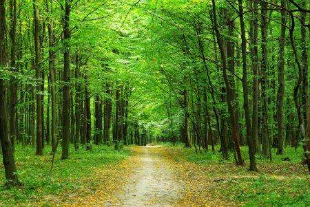 Photo pour Belle forêt verte en été - image libre de droit