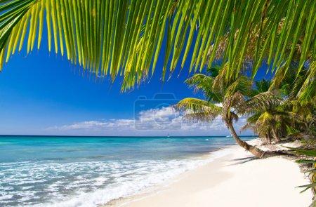 Beach and Palm tree