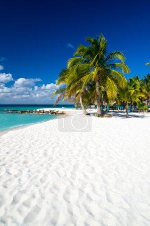 Beach and Palm