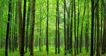 Photo pour Un chemin d'accès est dans le vert de la forêt - image libre de droit