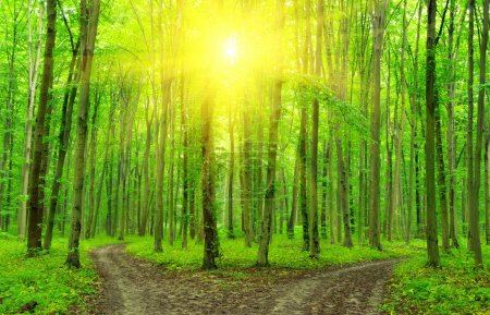 Photo for A path is in the green forest - Royalty Free Image