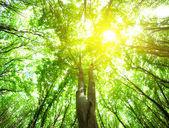"""Постер, картина, фотообои """"лесные деревья"""""""