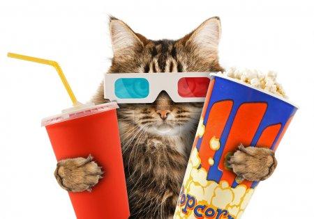 Foto de Gato viendo una película - Imagen libre de derechos