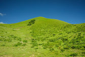 Green grass and blue sky mountain landscape