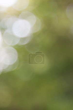 Image of a green summer blur background