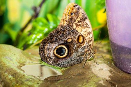 Photo pour Grand papillon tropical - image libre de droit