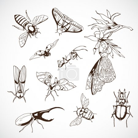 Illustration for Insect Set, hand Drawn vintage illustrations with butterflies - Royalty Free Image