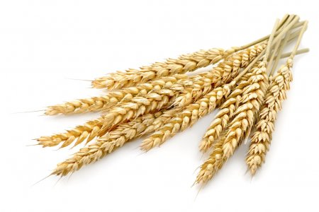 Photo for Wheat on the white background - Royalty Free Image