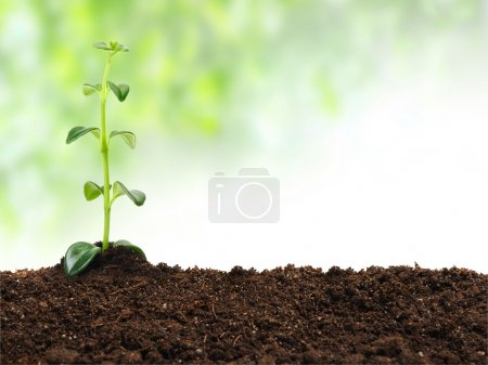 Photo for Young plant in the soil - Royalty Free Image