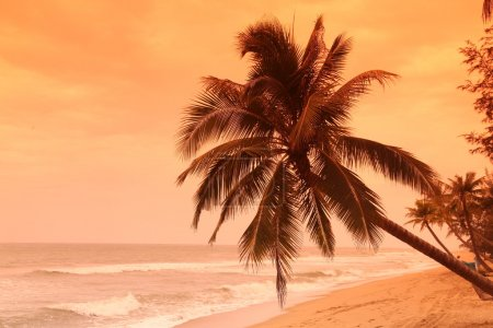 Palm at coast