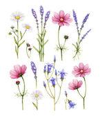 Kolekce Wild flowers. Akvarel ilustrací