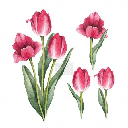 Photo pour Fleurs de tulipes Aquarelle sur fond blanc - image libre de droit