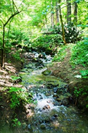 Photo pour Ruisseau courant dans les bois à la montagne - image libre de droit
