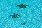 """Постер, картина, фотообои """"Три черепичные черепах на дне бассейна"""""""