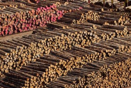 Photo pour Piles de journaux d'arbre coupé et troncs sur la jetée du port de wellington en Nouvelle Zélande, prêts à l'exportation - image libre de droit