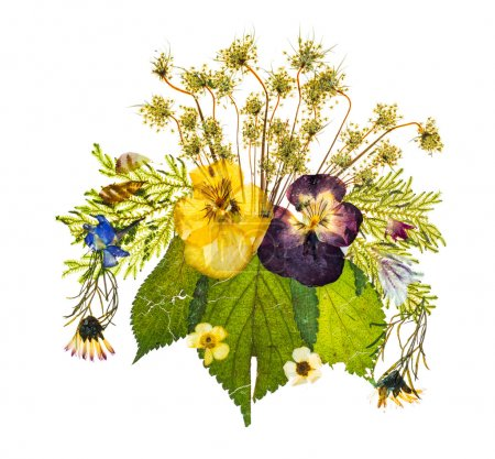 Arrangement of dried pressed flowers against white background