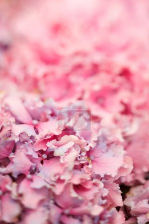 Photo for Pink Flowers - Royalty Free Image