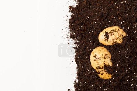 Potatoes on the soil
