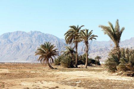 paume en désert