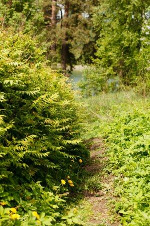 Photo pour Chemin forestier - image libre de droit