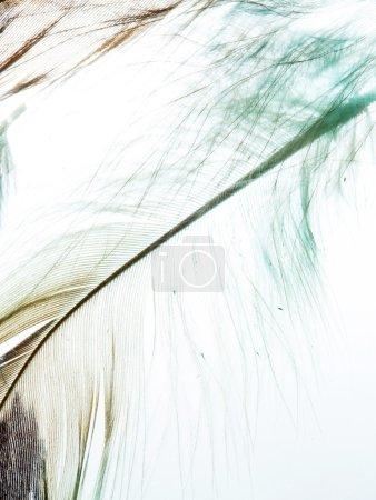 Photo pour Plumes de couleur - image libre de droit