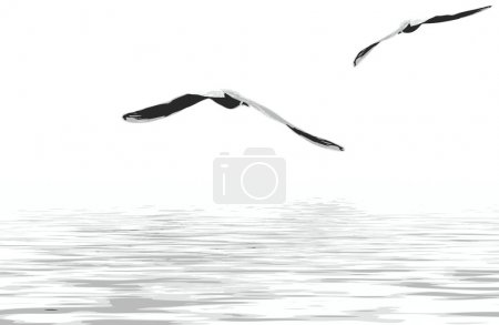Illustration for Sea gulls - Royalty Free Image