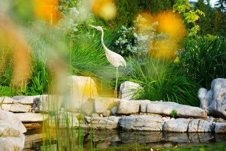 Snowy Egret among the Water Lilies at the botanical gardens
