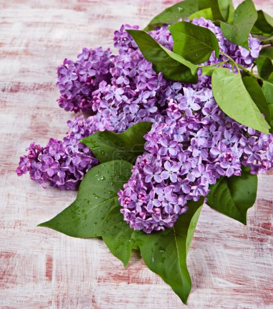 Flowers lilac on the old boards