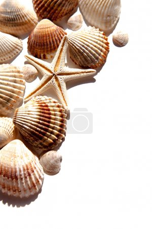 sea shells and star