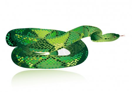 Illustration pour Beau serpent vert - image libre de droit
