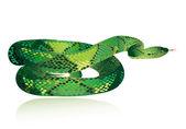 Gyönyörű zöld kígyó