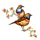 Cute birds for your design watercolor