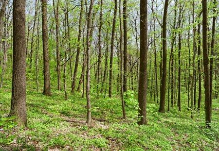 Photo pour Profondeur des forêts de feuillus au printemps ensoleillé. Image nette super détaillée capturée avec Zeiss 21mm f / 2.8 Distagon T * Lens - image libre de droit