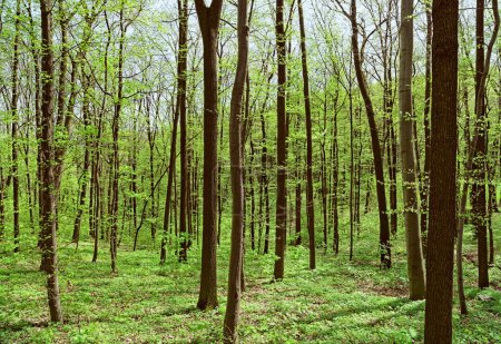 Photo pour Profondeur des forêts de feuillus au printemps ensoleillé. Image nette super détaillée capturée avec Zeiss 21mm f2.8 Distagon T Lens - image libre de droit