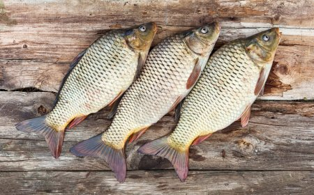 Photo for Carp fish over old wooden plank board - Royalty Free Image