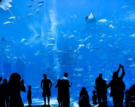 Silhouettes of against a big aquarium