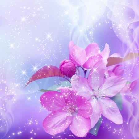 Foto de Flor de cerezo y brillo de estrellas - Imagen libre de derechos