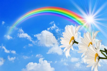Photo for Daisy and rainbow against the sky - Royalty Free Image