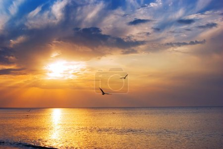 Photo for Early morning sunrise over the sea and a birds - Royalty Free Image