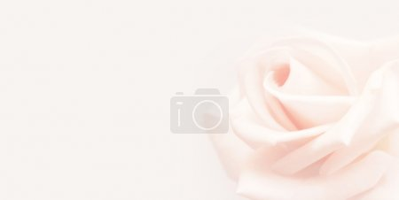 Photo for Softness pink rose on pink background - Royalty Free Image