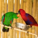 Постер, плакат: Two parrots