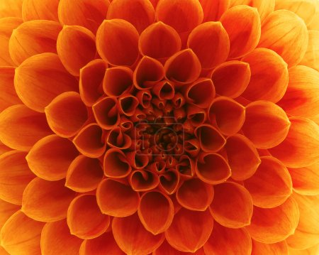 Photo for Abstract flower and beautiful petals - Royalty Free Image